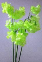 amidorinohana